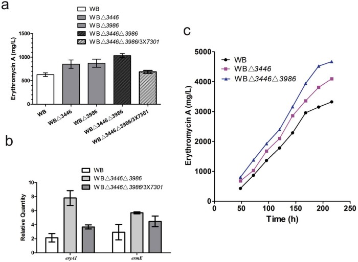 Effects of SACE_3446/SACE_3986 deletion and SACE_7301 overexpression on erythromycin production and gene transcription in the industrial strain WB. (a) Erythromycin A yield of WB and its derivatives cultured in flasks for 6 days. The mean values of at least three replicates are shown, with the standard deviation indicated by error bars. (b) qRT-PCR analysis of eryAI and ermE in WB, WBΔ 3446 Δ 3986 , and WBΔ 3446 Δ 3986 /3 × 7301 cultured for 4 days. (c) Time course of erythromycin A production of WB, WBΔ 3446 and WBΔ 3446 Δ 3986 in a 5-L fermentor. One of the representative datasets is shown.
