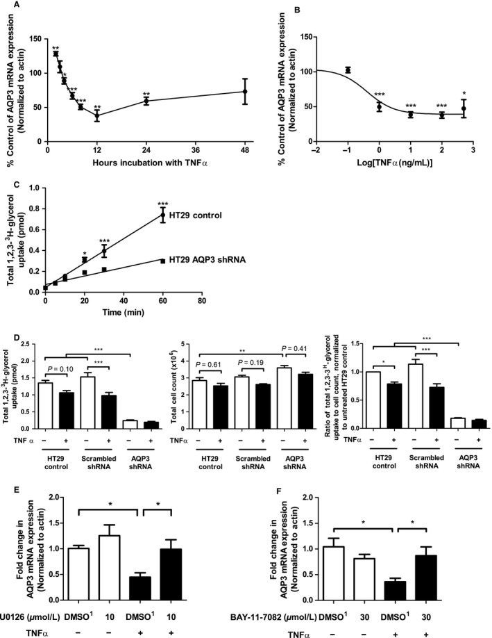 AQP 3 mRNA and protein expression are decreased following treatment with TNF α and this effect can be prevented by pretreatment with inhibitors of MEK / ERK and NF ‐ κ B signaling pathways. AQP 3 mRNA expression was assessed by real‐time RT ‐ PCR in HT ‐29 cells treated with TNF α (25 ng/mL) for the times indicated (A) or for a total of 12 h in a concentration‐dependent fashion as indicated (B). Statistical significance was assessed in comparison to untreated samples using an unpaired t ‐test (A) or ANOVA (B) (* P