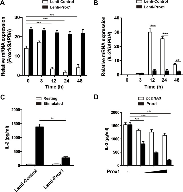Overexpression of Prox1 inhibits IL-2 expression ( A and B ) Lentiviral vector expressing Prox1 gene and GFP, or GFP alone, were generated. Jurkat cells were infected with Prox1 lentivirus or the control lentivirus. The GFP + Jurkat cells were sorted 48 h post-infection, and stimulated with anti-CD3/CD28 Dynabeads for indicated times. (A) Prox1 and (B) IL-2 mRNA levels were assessed by real-time PCR, while ( C ) IL-2 protein levels at 24 h were measured by ELISA. ( D ) Jurkat cells were transiently transfected with increasing amount of Prox1 plasmids (0.125, 0.25 and 0.5 μg/ml) or control vector (pcDNA3), and stimulated with anti-CD3/CD28 Dynabeads for 24 h. The IL-2 protein levels were measured by ELISA. The data from represent the mean ± SEM of three experiments, ** P