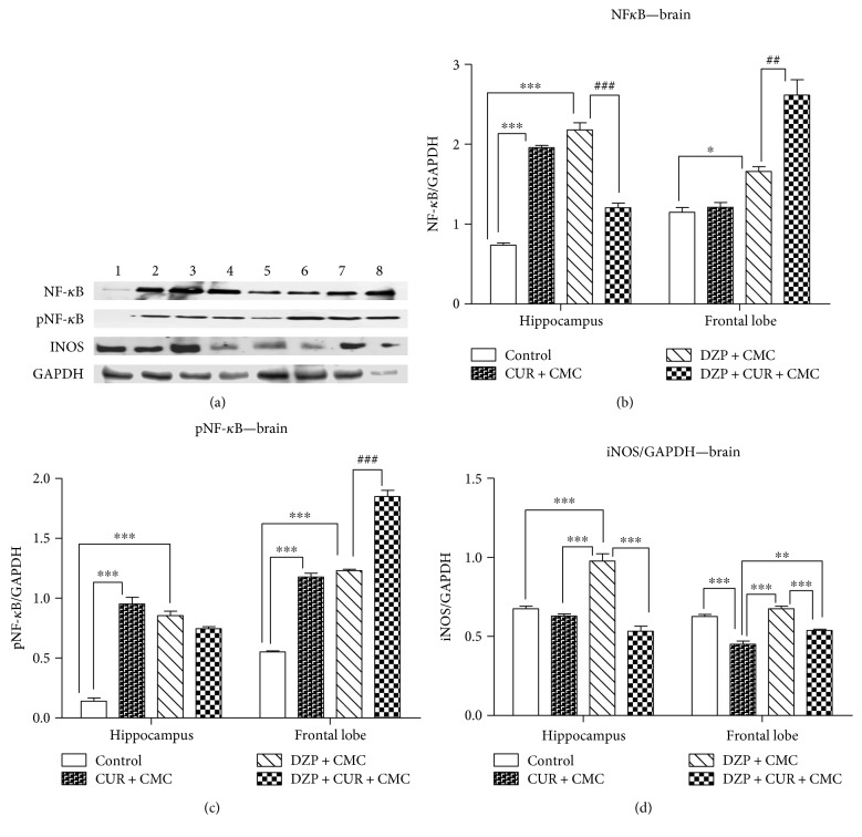 The effects of curcumin administration on the expression of NF- κ B, pNF- κ B, and iNOS in the brain. Expression of NF- κ B, pNF- κ B, and iNOS was analyzed by Western blot (WB). Image analysis of Western blot bands was done by densitometry, and results were normalized to GAPDH. WB images: 1–4 hippocampus, (1 = control, 2 = CUR + CMC, 3 = DZP + CMC, and 4 = DZP + CURC + CMC) and 5–8 frontal lobe (5 = control, 6 = CUR + CMC, 7 = DZP + CMC, and 8 = DZP + CURC + CMC); ( n = 3). Each group consisted of 3 samples. ∗ p