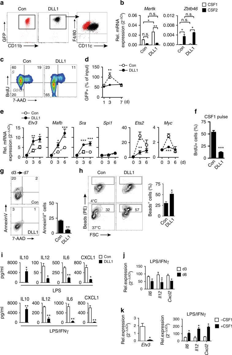 DLL1 instruct macrophage maturation in vitro. a Flow cytometry of Ly6C hi monocytes from Cx3cr1 GFP/+ mice cultured for 3d on IgG-Fc (con) or DLL1-Fc chimeric proteins, in the presence of 10 ng/ml CSF1. Representative of n = 5 independent experiments. b Quantitative RT-PCR analysis at d3 after culture with CSF1, CSF2. n = 2 independent experiments performed in duplicates, error bars represent s.e.m. ** p