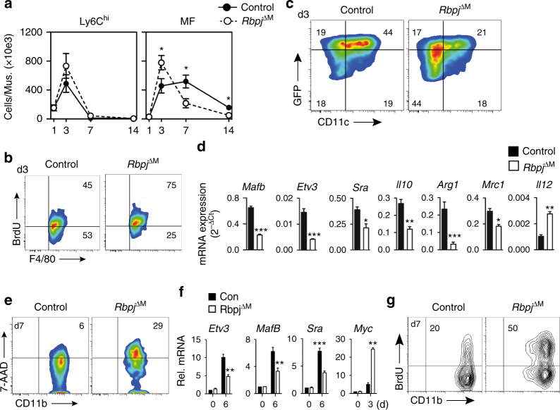 Canonical Notch signaling regulates macrophage maturation in vivo. a Analysis of cell populations by flow cytometry in ischemic muscle of Rbpj conditional mutant mice ( Rbpj ΔM ) and control mice. n = 7/9 mice/group, error bars represent s.e.m., * p