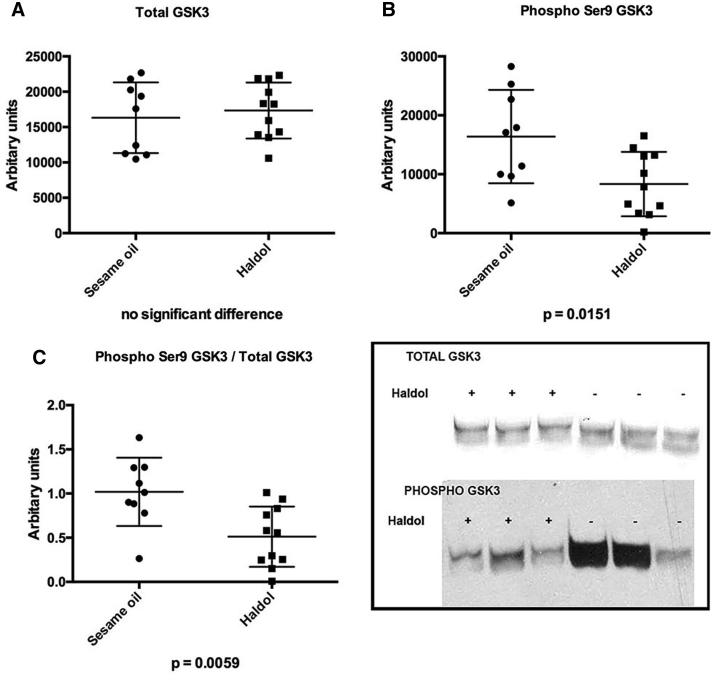 Western blots (WB) performed on frontal cortex of mice treated with haloperidol decanoate (N = 11) or vehicle (N = 9) for 2 weeks. (A) No differences were observed in total <t>GSK-3β.</t> (B) Inactivated pGSK-3β was reduced in haloperidol treated mice. (C) The ratio of inactive/total pGSK-3β/total GSK-3β was reduced in haloperidol treated mice, suggesting an activation of the kinase. The insert displays typical gel lanes from immunoblots used for quantitative analyses with ImageJ.