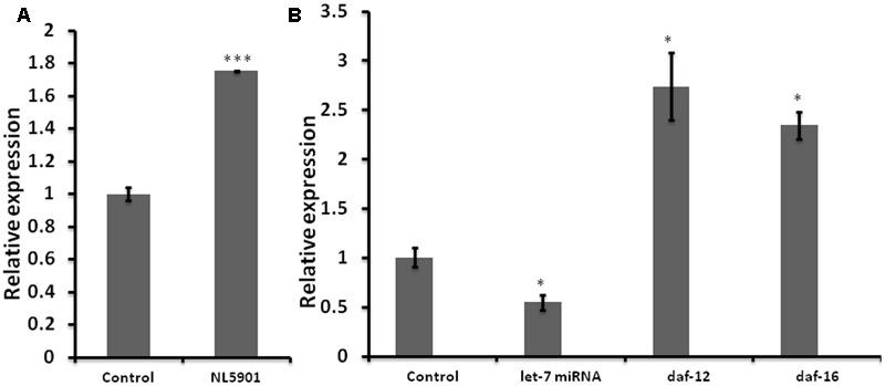 Graph depicting relative expression of let-7 miRNA and its targets, studied through real-time PCR (qPCR). (A) Expression level of let-7 miRNA in PD model vs. wild type. (B) Expression level of let-7 miRNA and their targets in let-7 knockdown worms. ∗ p