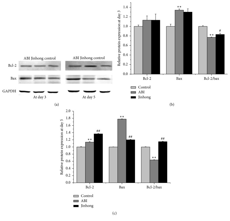 Relative protein expression analysis: protein expression of bcl-2 and bax in intestinal tissue at days 3 and 5, respectively (a), and the densitometric quantification of the protein expression levels, which are expressed as a ratio to the expression of GAPDH of bcl-2, bax, and bcl-2/bax protein expression ratio at day 3 (b) and day 5 (c). Values were expressed as mean ± SD; n = 6 in each group; ∗∗ P