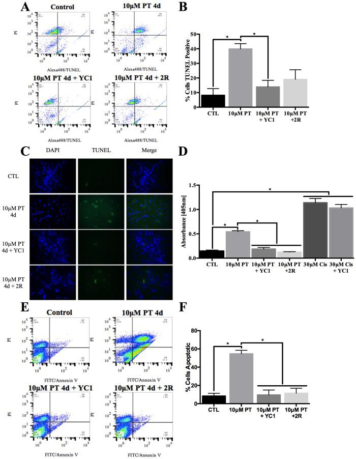 TD associated apoptosis is reduced following HIF-1α inhibition. Primary astrocytes were treated with 10μM pyrithiamine (10μM PT) for 4d, 10μM pyrithiamine for 4d with YC1 (10μM PT+YC1) or treatment with 10μM pyrithiamine for 4d followed by 3μM thiamine repletion for 2d (10μM PT+2R). Representative plots of TUNEL assay analyzed by flow cytometry (A) with a quantitative summary of n = 3 independent replicates +/- SD (B). C) Representative microscopy images of TUNEL assay performed on fixed cells are shown after treatment with PT for 4d, PT + YC1 for 4d or PT for 4d with 2d of repletion. D) N = 3 independent replicates of the Cell death ELISA +/- SD. E) Representative plots of PI/ Annexin V staining analyzed by flow cytometry with a summary of n = 3 independent replicates +/- SD (F). (★) Represents a statistically significant difference of p
