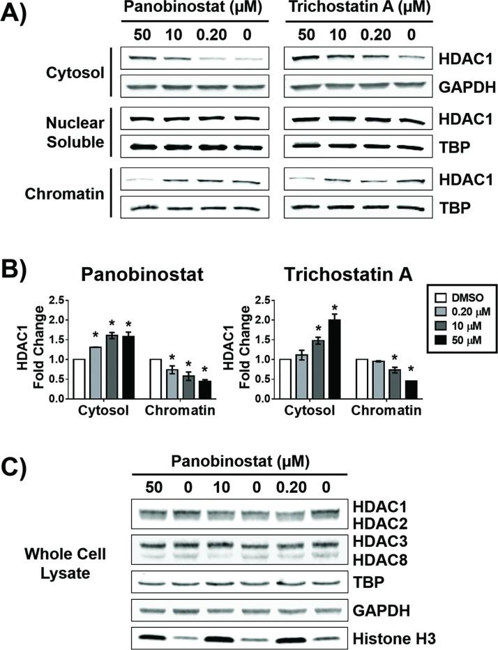 Potent HDACi alter the subcellular localization of HDAC1. MCF-7 cells were treated with indicated concentrations of panobinostat or trichostatin A for 12 hours. A) Western blot analysis of the abundance of HDAC1 in the cytosolic, nuclear soluble, and chromatin bound fractions. B) Densitometry analysis of the abundance of HDAC1 normalized to GAPDH (cytosolic fraction) or to TATA-binding protein (TBP, nuclear soluble and chromatin bound fractions). C) Western blot analysis of the total abundance of class I HDACs and the loading controls TBP, GAPDH, and histone H3 after treatment with indicated concentrations of panobinostat for 12 hours. * Statistically significant difference compared with DMSO control (Student's t-test, P