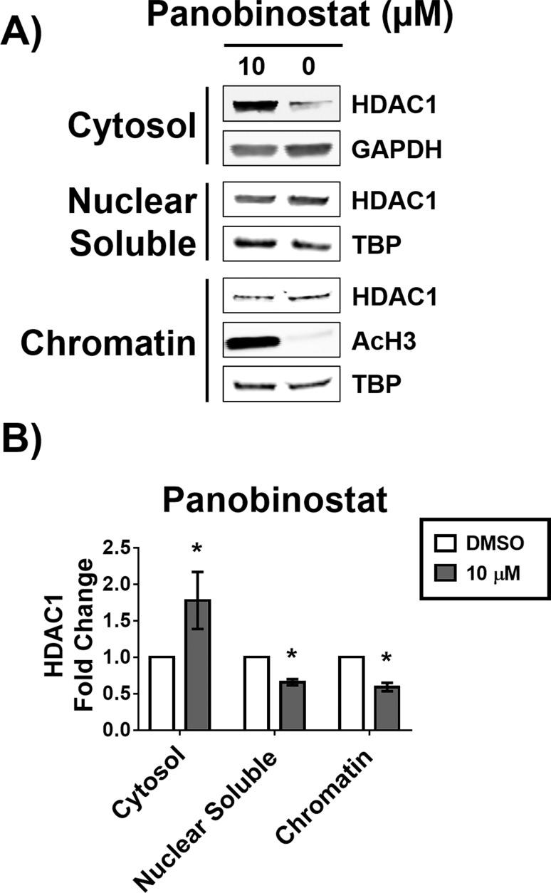 Increase in cytosolic HDAC1 is irreversible up to 24 hours. MCF-7 cells were treated with 10 μM panobinostat for 12 hours, the compound was then removed and cells allowed to recover for 24 hours. A) Western blot analysis of the abundance of HDAC1 in the cytosolic, nuclear soluble, and chromatin bound fractions. B) Densitometry analysis of the abundance of HDAC1 normalized to GAPDH (cytosolic fraction) or to TATA-binding protein (TBP, nuclear soluble and chromatin bound fractions). * Statistically significant difference compared with DMSO control (Student's t-test, P