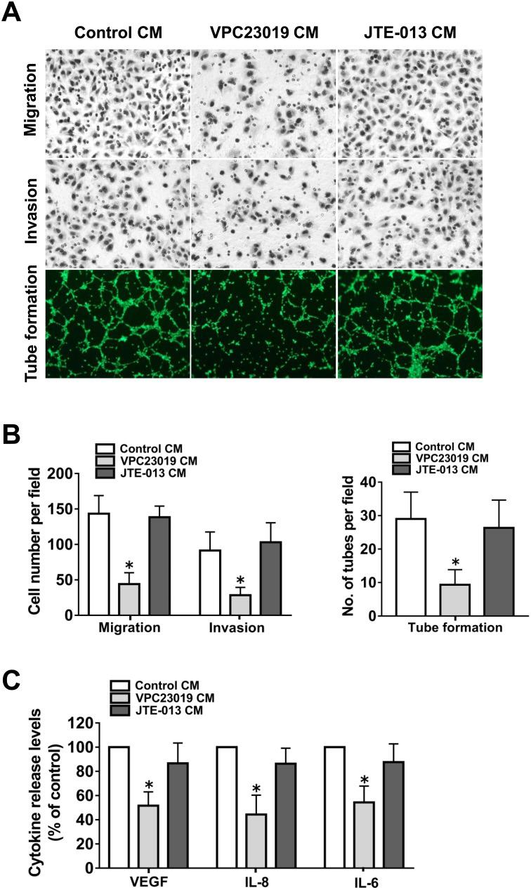 Effect of S1PR1-3 inhibition on angiogenesis in vitro (A) Representative images of the migration, invasion and tube formation assays. Endothelial cells were stimulated with CM collected from the ovarian cancer cells precultured with VPC23019 (300nM) or <t>JTE-013</t> (1μM). Migrated cells, invaded cells and tube like structures were photographed. (B) Statistical analysis of the migrated cells, invaded cells and tube like structures. (C) Effect of VPC23019 and JTE-013 on the VEGF, IL-8 and IL-6 secretion of ovarian cancer cells. All experiments were repeated three times, with three replicates in each group ( * p