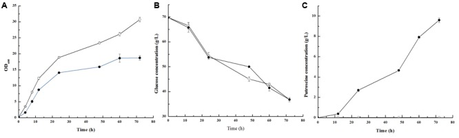 The growth (A) , glucose consumption (B) and putrescine production (C) in Corynebacterium glutamicum PUT-ALE (•) and ATCC 13032 (∘). Data represent the average of three replicates and error bars represent standard deviation.