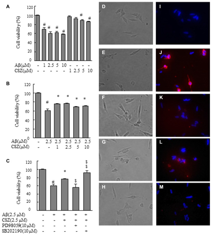 Effect of cilostazol (CSZ) on viability and staining with annexin V and Hoechst33342 in amyloid β (Aβ)-stimulated SH-SY5Y cells. We evaluated the effect of Aβ on cell viability using MTT assay and stained with annexin V and Hoechst33342. (A) Cell viability of SH-SY5Y cells treated with Aβ and CSZ for 20 h. (B) The effect of Aβ with or without CSZ on cell viability of SH-SY5Y cells. (C) The effect of Aβ and CSZ with or without the inhibitor of MAPK/ERK kinase1/2 (MEK1/2) (PD98059) or p38 mitogen-activated protein kinases (MAPK) (SB202190) on cell viability of SH-SY5Y cells. Cells were observed under a phase-contrast microscope (D–H) and a fluorescence microscope (I–M) . Images (D,I) untreated SH-SY5Y cells; images (E,J) SH-SY5Y cells treated with Aβ; and images (F,K) : SH-SY5Y cells treated with Aβ + CSZ; images (G,L) SH-SY5Y cells treated with Aβ + CSZ + inhibitor of MEK1/2; images (H,M) SH-SY5Y cells treated with Aβ + CSZ + inhibitor of p38 MAPK. Values are expressed as mean + SEM. # Compared vs. respective controls ( p