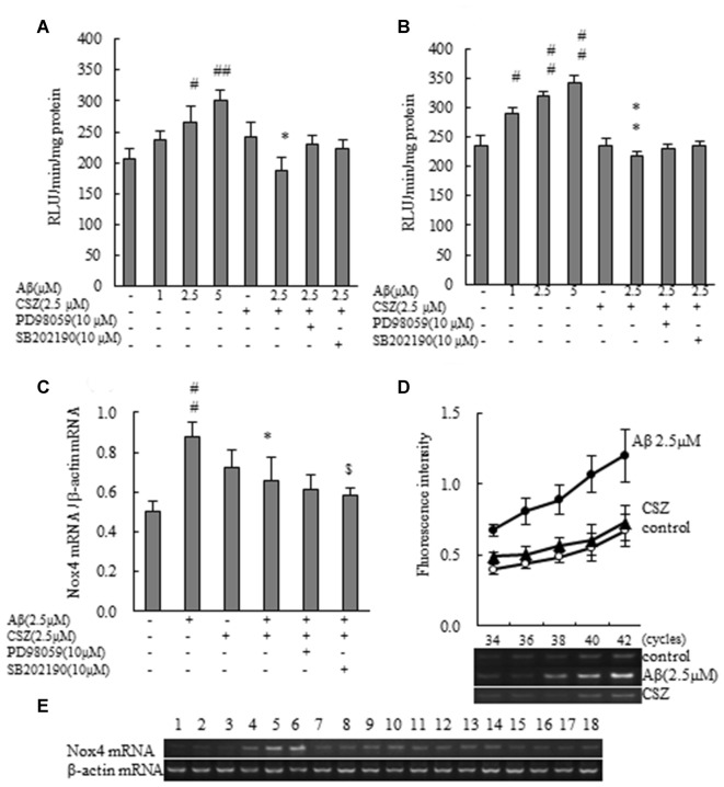 Effect of CSZ on Nox activity and the mRNA expression analysis of NOX4 in Aβ-stimulated SH-SY5Y cells. (A) Nox activities were determined in SH-SY5Y cells incubated with or without 1 h pretreatment with CSZ or inhibitor of MEK1/2 or p38 MAPK followed by 1 h incubation with Aβ. Values are expressed as mean + SEM. (B) Nox activities were determined in SH-SY5Y cells incubated with or without 1 h pretreatment with CSZ or inhibitor of MEK1/2 or p38 MAPK followed by 20 h incubation with Aβ. Values are expressed as mean + SEM. (C) The mRNA expression analysis of NOX4 in treated SH-SY5Y cells are examined. The effects of respective inhibitor were also examined. Values are expressed as mean + SEM. (D) Reaction cycles-PCR product yield curves of each reaction mixture were plotted. (E) Picture shows the bands obtained in agarose gel electrophoresis for Nox4 and β-actin. Lane1–3: control, Lane4–6: 2.5 μM Aβ, Lane7–9: 2.5 μM CSZ, Lane10–12: 2.5 μM Aβ + 2.5 μM CSZ, Lane13–15: 2.5 μM Aβ + 2.5 μM CSZ + 10 μM PD98059, Lane16–18: 2.5 μM Aβ + 2.5 μM CSZ + 10 μM SB202190. # Compared vs. respective control cells ( p