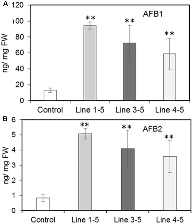 Aflatoxin (AF) contents in the control (empty vector transformed) and ZmPRms– RNAi transgenic maize kernels at 7 days post inoculation (dpi) with A. flavus . (A) AFB1; and (B) AFB2. Data are mean ± SE of 4 biological replicates. ∗∗ Denotes significant difference between control and PRms silenced lines ( P ≤ 0.05).