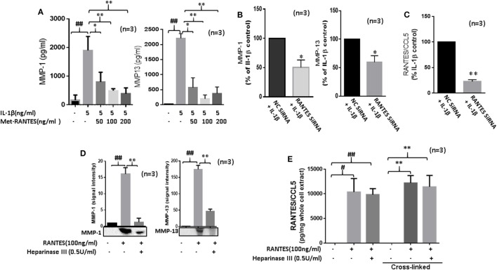 Regulated on activation, normal T expressed, and secreted (RANTES)/CC ligand 5 (CCL5) contributes to the proinflammatory cytokine-mediated matrix metalloproteinase (MMP)-1 and MMP-13 expression in rheumatoid arthritis (RA). (A) Met-RANTES inhibits interleukin (IL)-1β-induced MMP-1 and MMP-13 production in rheumatoid arthritis synovial fibroblasts (RASFs). (B) Effect of RANTES/CCL5 knockdown on IL-1β-induced MMP-1 and MMP-13 production in RASFs. RASFs were transfected with RANTES/CCL5-specific small-interfering RNA (siRNA) for 48 h and then stimulated with IL-1β (5 ng/ml) for 24 h. Levels of MMP-1 and MMP-13 in conditioned media was quantified using ELISA and represented as percent of IL-1β-treatment control. (C) Conditioned media from the above treated samples were also evaluated to determine percent knockdown of RANTES/CCL5 using siRNA approach and represented as percent of IL-1β treatment control. (D) Degradation of heparan sulfate proteoglycans (HSPG) by heparinase III reduces RANTES/CCL5-induced MMP-1 and MMP-13 expression in RASFs. RASFs were pretreated with heparinase III (0.5 U/ml) for 2 h followed by stimulation with RANTES/CCL5 (100 ng/ml) for 24 h. Conditioned media was concentrated and used to detect MMP-1 and MMP-13 expression using Western immunoblotting. Densitometry was performed to determine the relative changes. (E) RASFs pretreated with heparinase III (0.5 U/ml) for 2 h followed by stimulation with RANTES/CCL5 (100 ng/ml) for 1 h were used with or without cross-linking step for the detection of RANTES/CCL5 in the whole cell lysates (25 µl). Values are represented as mean ± SE from three independent experiments performed using RASFs from different donors under similar conditions. ## p