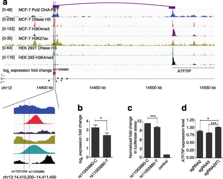 Regulatory SNP rs11055880 is in an intergenic enhancer regulating the expression of the ATF7IP gene. a Genomic context of rs11055880 shown in the integrative genome viewer. ChIA-PET signals in MCF7 cells (the interaction between rs11055880 and ATF7IP shown by the purple boxes ), ENCODE annotations of DNase hypersensitive sites, H3K4me3, and H3K27ac in MCF7 cells, and DHSs and H3K4me3 marks in HEK293 cells are shown in tracks 1–6. The regulatory activities are shown in track 7. Red dots represent SNPs in PREs and the enlarged one is rs11055880. The blue dots represent SNPs in NREs and the black dots represent other tested SNPs in this region. b Activities of two alleles of rs11055880 in our screen. Two-tailed paired t -test was used, * p value = 0.047. c Activities of two alleles of rs11055880 in the luciferase reporter assay. Two tailed t-test, *** p value = 2.0 × 10 −4 . d Expression levels of ATF7IP by qPCR in HEK293T cells expressing sgRNAs targeting the rs11055880 loci (rs11055880-sg2 and rs11055880-sg5) after KRAB-dCas9 activation. P values were calculated by t -test compared to a non-targeting (NT) group from three replicates; * p value = 0.016, *** p value = 4.0 × 10 −4 . For b – d , the error bars represent standard erorrs