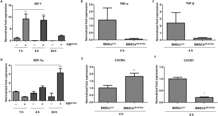 BMSCs FIR 50 min overexpress SDF-1α and IGF-1 at the mRNA level. ( A – F ) Graphs of qRT-PCR analysis results depicting the mRNA expression of IGF-1, TNF-α, TGF-β, SDF-1α, CXCR4, and CXCR7 in BMSCs con (−) and BMSCs FIR 50 min ( + ) at the indicated times after FIR 50 min preconditioning. Data were analyzed using Student's t-test or AVOVA followed by Tukey's post hoc tests and displayed as mean ± SD (n = 6). * P