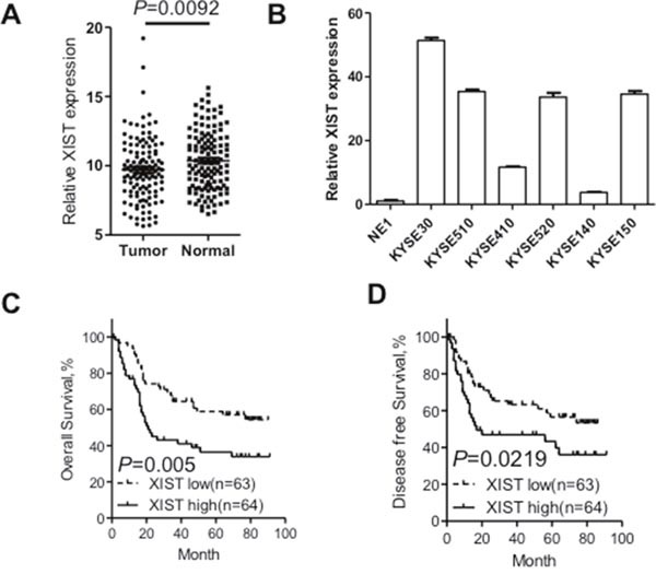 XIST was overexpressed in ESCC tissues and correlates with adverse prognosis of ESCC patients (A) Relative XIST expression in ESCC tissues (n=127) compared with corresponding adjacent normal tissues (n=127). XIST expression was examined by qRT-PCR and normalized to GAPDH expression. Results were presented as Δcycle threshold (ΔCt) in tumor tissues relative to normal tissues. (B) Expression of XIST in ESCC cell lines (KYSE30, KYSE510, KYSE410, KYSE520, KYSE140 and KYSE150) compared with that of the immortalized esophageal epithelial cell line NE1, data was presented as expression fold change relative to NE1. (C) ESCC patients were assigned to high XIST group and low XIST group according to the fold change of XIST in tumor tissues compared with that in normal tissues. Kaplan–Meier curves indicate patients with high-level XIST expression (n=64) showed reduced overall survival time compared with patients with low-level XIST expression (n=63) ( P =0.005, log-rank test). (D) Kaplan–Meier curves indicate patients with high-level XIST expression showed reduced disease-free survival time compared with patients with low-level XIST expression ( P =0.0219, log-rank test). Error bars: mean ± SD, n = 3. * P