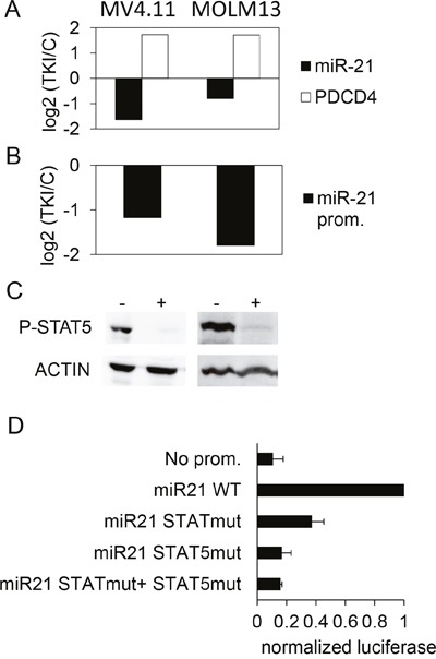 Effect of TKI treatment on the expression of miR-21 and PDCD4 in AML cells lines (A) MV4.11 and MOLM13 cells were treated with sunitinib (0.1μM, 24h). Then, PDCD4 mRNA and miR-21 were quantified by RT-qPCR (A), and miR-21 promoter activity was assessed by luciferase measurements in cells transduced with the miR-21 promoter-Luciferase lentivirus. (B) For each cell line, histograms represent the base 2 logarithm of the ratio (treated/not treated cells). (C) phospho-STAT5 levels were assessed in control (-) or TKI-treated (+) MV4.11 (left) and MOLM13 (right) cells. (D) Luciferase activity was measured in MOLM13 cells 24 hours after transfection with pGL4.10 plasmids having no promoter, WT or mutated miR-21 promoters.