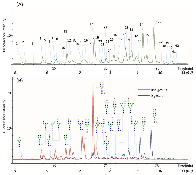 Representative UPLC chromatogram profiles of QC N-glycan samples (A) 42 peaks were identified in the glycan profiles of QC samples. (B) Glycan profiles before and after digestion with α2-3,6,8,9 Neuraminidase to remove all the sialic acids residues.
