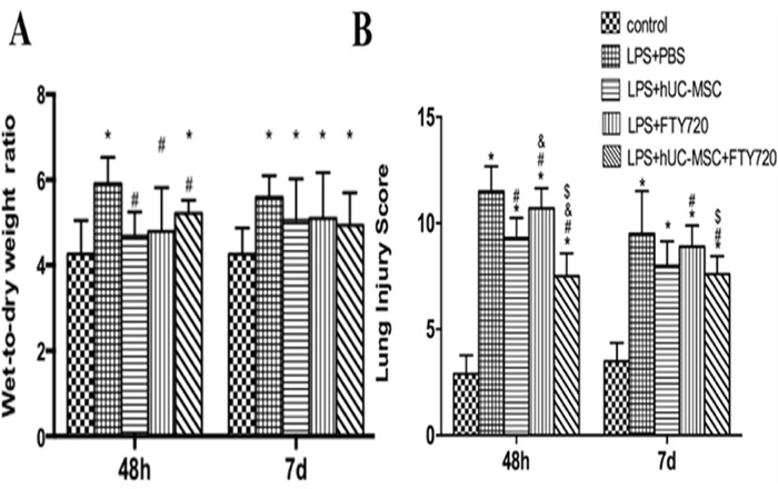 Quantification of lung edema and injury in LPS-challenged mice (A) Lung edema was determined as the lung wet/dry weight ratio. Results are shown for samples taken at 48 h and 7 days after LPS challenge. (B) Lung injury scores show an obvious decrease in the severity of lung injury in the LPS+hUC-MSCs and LPS+FTY720 groups, and especially, in the LPS+hUC-MSCs+FTY720 group. Data are represented by the mean ± SD, n = 10 at each time point for each group. * P