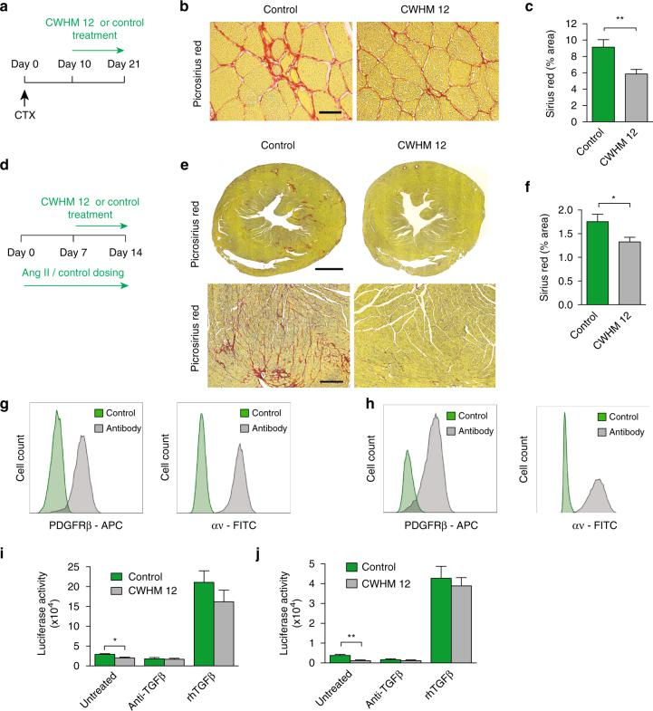 Blockade of αv integrins by a small molecule (CWHM 12) attenuates established skeletal muscle and cardiac fibrosis, and αv integrins represent a tractable therapeutic target in human muscle fibrosis. a Dosing regime in the therapeutic skeletal muscle fibrosis model. <t>Alzet</t> osmotic <t>minipumps</t> containing CWHM 12 or CWHM 96 (control) were inserted ten days after intramuscular CTX injection. Tissues were harvested at day 21 following CTX injection. b Representative images of picrosirius red stained sections from control- and CWHM 12-treated mice. Scale bar 25 μm. c Digital image analysis quantification of collagen (picrosirius red staining) ( n = 10). d Dosing regime in the therapeutic cardiac fibrosis model. Seven days following commencement of AngII treatment, Alzet osmotic minipumps containing CWHM 12 or CWHM 96 (control) were inserted. Tissues were harvested at day 14 after commencement of AngII treatment. e Representative images of picrosirius red stained sections from control- and CWHM 12-treated mice. Scale bars 1 mm in whole heart sections, 70 μm for magnified fields. f Digital image analysis quantification of collagen (picrosirius red staining) ( n = 11). g , h Flow cytometric analysis of PDGFRβ and αv integrin expression on PDGFRβ + cells from human skeletal muscle ( g ) and heart ( h ). i , j TGFβ activation by control- or CWHM 12-treated PDGRβ + cells isolated from human skeletal muscle ( i ) and cardiac muscle ( j ) ( n = 4). TGFβ activation was assessed alone, in the presence of TGFβ-blocking antibody (clone 1D11, 40 μg ml −1 ) (anti-TGFβ), and in the presence of recombinant human TGFβ1 (rhTGFβ) (300 pg ml −1 ). Data are expressed as mean ± SEM. * P