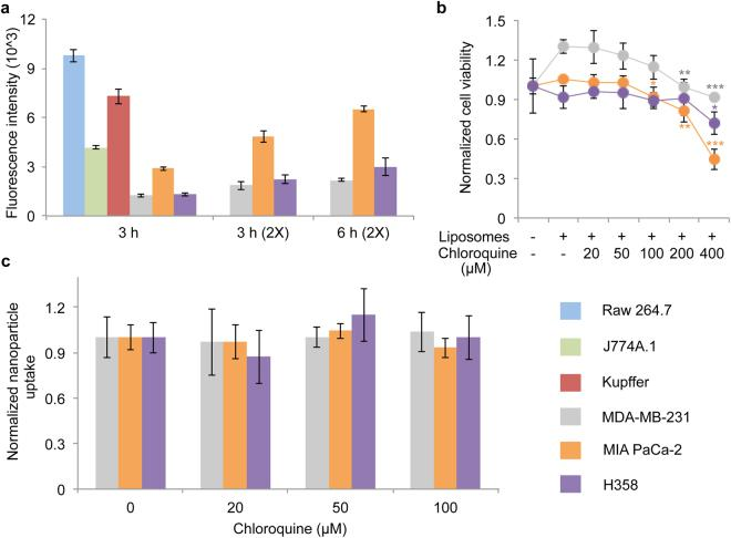 Effect of chloroquine on nanoparticle uptake in cancer cells. ( a ) Comparison of liposome (non-pegylated) uptake in macrophages (Raw 264.7, J774A.1, and Kupffer cells) and cancer cells (MDA-MB-231 breast cancer cells, MIA PaCa-2 pancreatic cancer cells, H358 lung cancer cells). ( b ) Viability of cancer cells in response to chloroquine and liposomes (6 h). ( c ) Effect of chloroquine on liposome uptake in MDA-MB-231 cells (6 h). Values are normalized to those of control cells. Data is presented as mean ± s.d. of triplicates. Statistics by Student's t -test. ** P