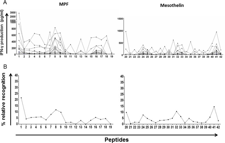 Whole-blood IFN-γ responses to peptides spanning the MPF and mature <t>mesothelin</t> components 42 non-overlapping 15-mer peptides spanning the entire mesothelin molecules were exposed to peripheral blood of GBM patients over a seven-day period. Supernatants were then harvested for IFN-γ detection by ELISA. Absolute IFN-γ concentrations (pg/ml) produced by each patient for a single peptide A. as well as the average value per peptide (total IFN-γ/no. of patients) normalised to the sum of IFN-γ production for the entire peptide pool in percentage B. are shown. Immune hotspots within the mesothelin component, defined by peptide-specific IFN-γ production, identify several peptides which may represent viable targets to expand T-cells in host-directed therapies.