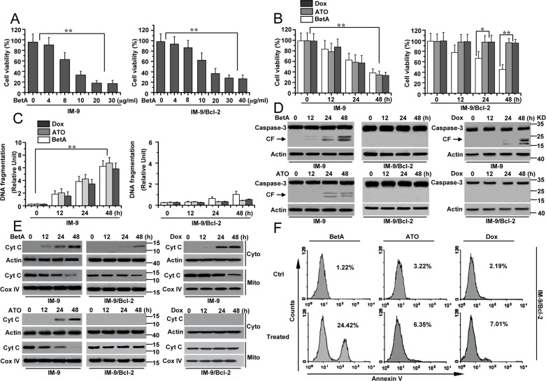 BetA induces apoptosis-independent cell death in IM-9/Bcl-2 and apoptosis in IM-9 cancer cells (A) Analysis of cell viability treated with BetA. IM-9 and IM-9/Bcl-2 cells were treated with different concentrations of BetA for 48 h. Cell viability was determined as described in Materials and methods. A minimum of 100 cells per sample for triplicate samples was counted per condition per experiment. Graphs showing results of quantitative analyses ( n =3, mean ± S.D. **, P