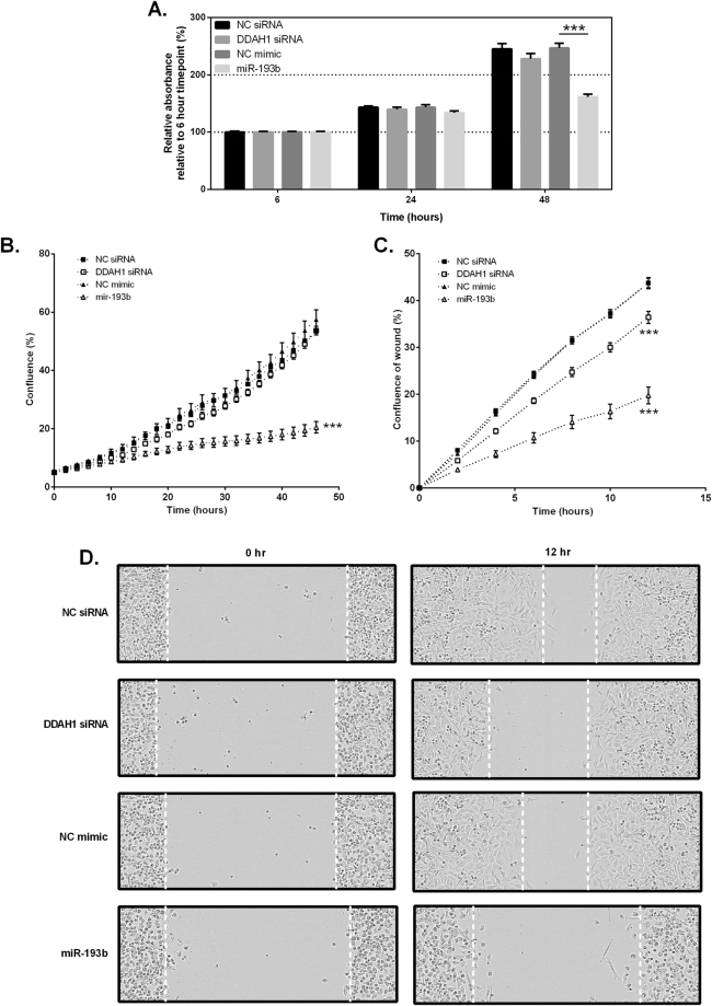 Effect of DDAH1 inhibition on MDA-MB-231 cell proliferation and migration. ( A ) MDA-MB-231 cells were transfected with 30 nM DDAH1-targeting siRNA, miR-193b mimic or appropriate controls and proliferation assessed by staining with crystal violet at 6, 24 and 48 hr post transfection. Absorbance was measured at 570 nm after extensive washing. ( B ) MDA-MB-231 cells were transfected with 30 nM DDAH1-targeting siRNA, miR-193b mimic or appropriate controls and proliferation was assessed using the IncuCyte™ imaging system. Confluence was measured every 2 hr for a 48 hr period. ( C ) Scratch wound migration assays were performed with MDA-MB-231 cells using the IncuCyte™ imaging system following generation of a wound in a confluent cell monolayer. Relative wound density was determined across 3 sections per well over a 12 hr period. Data are represented as the mean of two independent experiments performed in triplicate. Error bars represent SEM. ***p
