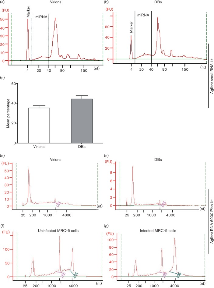 Bioanalyser-based analysis of RNA isolated from virions and dense bodies (DBs). To examine the small RNA species in virions (a) and DBs (b), a small RNA analysis kit (Agilent) was used. Representative electropherograms of RNA from virions and DBs show both miRNAs and small RNAs. (c) Mean percentages of miRNAs in virions and DBs; values are mean± sem of three experiments performed in triplicate. To inspect the total RNA species in virions (d) and DBs (e), an Agilent RNA 6000 Pico kit was used. Representative electropherograms of RNA from virions (d) and DBs (e) show very little 18S and almost no 28S rRNA, in contrast to the uninfected (f) and infected (g) MRC-5 cells. FU, fluorescence units; nt, number of nucleotides. Representative data from three experiments performed in triplicate are shown.
