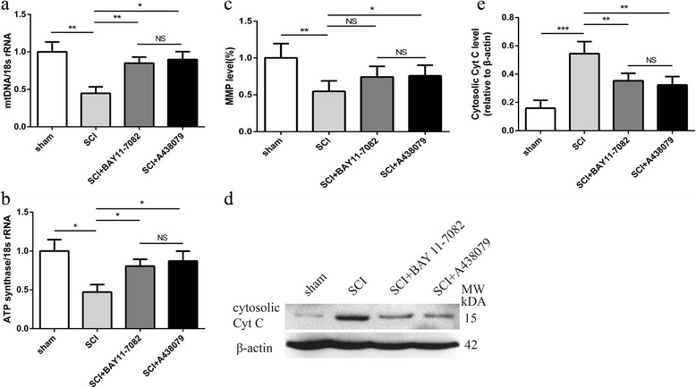 BAY 11-7082 or A438079 inhibits mitochondrial dysfunction. a Quantitative real-time PCR analysis of ATP synthase 3 days post injury. b Quantitative real-time PCR analysis of mitochondrial (mt) DNA 3 days post injury. c MMP level in the spinal cord tissue. d Representative western blots of <t>cytosolic</t> cytochrome c (Cyt C) 3 days post injury. e Quantification analysis of cytosolic <t>Cyt</t> C 3 days post injury. * p