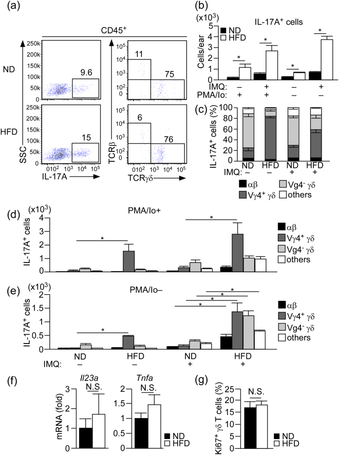 Increase of IL-17A-producing cells in the skin of HFD-fed mice in both steady and inflammatory states. ( a ) Flow cytometric analysis of IL-17A-producing cells in the whole ear skin of HFD- or ND-fed mice in the steady state. The single cell suspensions were stimulated with phorbol myristate acetate (PMA) and ionomycin in the presence of brefeldin A for 3 h before intracellular staining. Left panels indicate cells gated on CD45 + , and right panels indicate cells gated on IL-17A + in the left panels. ( b – e ) Statistical analysis of the number of total IL-17A-producing cells ( b ) and the percentage ( c ) and number/composition ( d , e ) of IL-17A-producing cells. Samples were collected at 24 h after the last IMQ treatment, and the ear skin was digested with collagenase in the presence or absence of brefeldin A. Single cell suspensions were either stimulated with PMA and ionomycin in the presence of brefeldin A for 3 h before intracellular staining ( b – d ) or directly subjected to intracellular staining ( b , e ). ( f ) Fold induction of Il23a and Tnfa mRNA in the whole ear skin of ND- or HFD-fed mice in the steady state, as analyzed by quantitative RT-PCR. Results are presented relative to those of ND. The average mRNA expression level in ND-fed mice is set as 1. ( g ) Flow cytometric analysis of the ratio of Ki67 + TCRγδ + cells in the whole ear skin in the steady state. Results are expressed as the mean ± SEM. p -values were obtained by Mann-Whitney-U-test ( b , f , g ) and one-way ANOVA ( d , e ). * p ≤ 0.05. Data are from one experiment, representative of four independent experiments with three to four mice ( a ), two experiments with four mice ( g ). Data are pooled from two experiments with three to four mice ( b – e ), three experiments with three mice ( f ).
