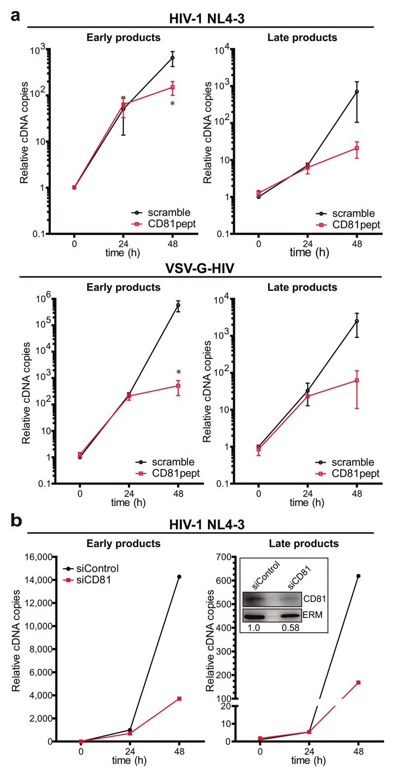CD81 regulates X4-tropic HIV-1 RT. a) Primary T lymphoblasts pre-treated with 2μM of scramble or CD81pept for 5 days, were infected with HIV-1 NL4-3 strain or HIV-VSV-G. Early or late RT products were measured as in Figure 2a . Data are mean fold change ± SEM of 2 independent experiments performed in triplicate, and analysed by two-way ANOVA with Bonferroni's post-test. b) Primary T lymphoblasts transfected with control or CD81 siRNA were infected with NL4-3 strain, and RT was measured as in Figure 2a . Data are from a representative experiment out of two. In-box shows immunoblots of whole cell lysates from the represented experiment probed for CD81, and ERM as loading control. The CD81/ERM signal ratio is indicated.