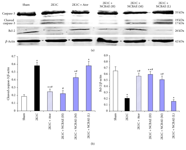 Effects of NCBAE on 2K1C-induced apoptosis. (a) The expression of Bcl-2 and cleaved caspase-3 protein was determined by western blotting. (b) Protein levels were measured by densitometry and presented as histograms. Bcl-2 and cleaved caspase-3 protein normalized to  β -actin.  ∗ P