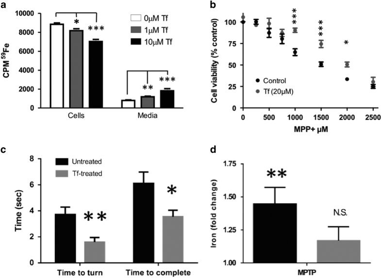 Tf supplementation simulates iron release from iron-replete cells and protects against MPTP in cells and mice. ( a ) Iron release from 59 Fe-loaded M17 cells was measured by γ-counter. ( b ) M17 cells were treated with MPP+ in the absence and presence of apo-Tf for 24 h. Cell viability assessed using the MTT assay. ( c , d ) MPTP (50 mg kg −1 ) was administered to mice. A subgroup of mice was subsequently administered TF (30 mg kg −1 ; intraperitoneal) every third day for 21 days and compared with controls ( N =9 each). ( c ) Mice performed the pole test 20 days after MPTP lesion. ( d ) Iron (AAS) content in nigra of MPTP and Tf-treated mice expressed as fold elevation of controls. Data are means±s.e.m. * P