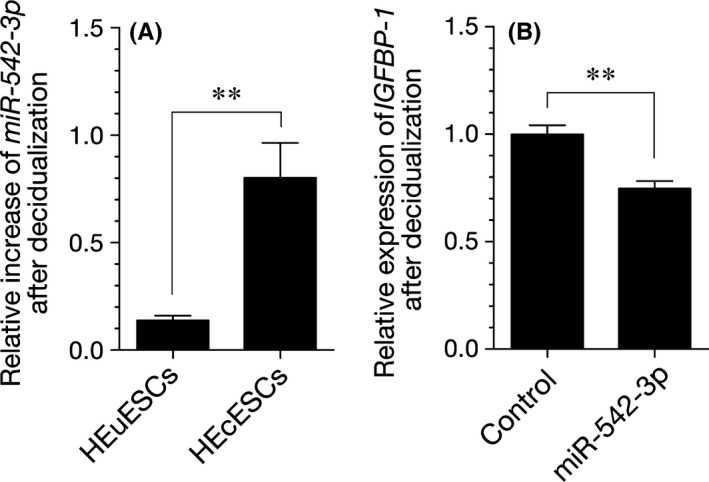 Impact of micro RNA (miR)‐542‐3p overexpression on the decidual phenotype. A, A quantitative real‐time polymerase chain reaction amplification ( <t>qRT</t> ‐ <t>PCR</t> ) analysis of the miR‐542‐3p expression levels in the human eutopic endometrial stromal cells ( HE u ESC s) and the human ectopic endometrial stromal cells ( HE c ESC s) that had been treated with or without 8‐bromo‐cyclic adenosine monophosphate (8‐br‐ cAMP ) and medroxyprogesterone acetate ( MPA ) for 6 days. The expression of miR542‐3p was calculated as the fold change, relative to the HE u ESC s or HE c ESC s. B, A qRT ‐ PCR analysis of the insulin‐like growth factor‐binding protein 1 ( IGFBP 1 ) transcript levels in the HE c ESC s that were transfected with a miR‐542‐3p mimic or NC mimic and decidualized for 6 days. The expression levels were normalized to glyceraldehyde 3‐phosphate dehydrogenase. The data are presented as the mean±standard error of the mean of three independent experiments. ** P