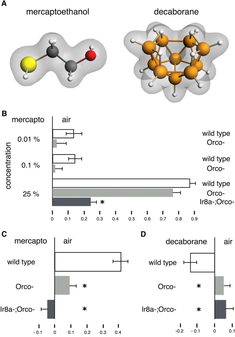 Responses to β-mercaptoethanol and decaborane in wild-type Orco − and Ir8a − Orco − double mutants. A , The high molecular divergence of β-mercaptoethanol and decaborane. B–D , All graphs represent the mean relative distribution of flies in the arms of the maze ± SEM after the indicated treatment. Groups of flies were exposed to the indicated odorants per condition. Significance values are calculated by LSM contrast analysis and are indicated on the graphs with a single star. B , Responses of wild-type and anosmic flies to a range of β-mercaptoethanol concentrations. Wild-type flies are shown in white bars, Orco − flies are shown in light gray bars and Ir8a;Orco - flies are shown in dark gray bars. ANOVA indicated significant differences ( F (6,87) = 39.7679, p