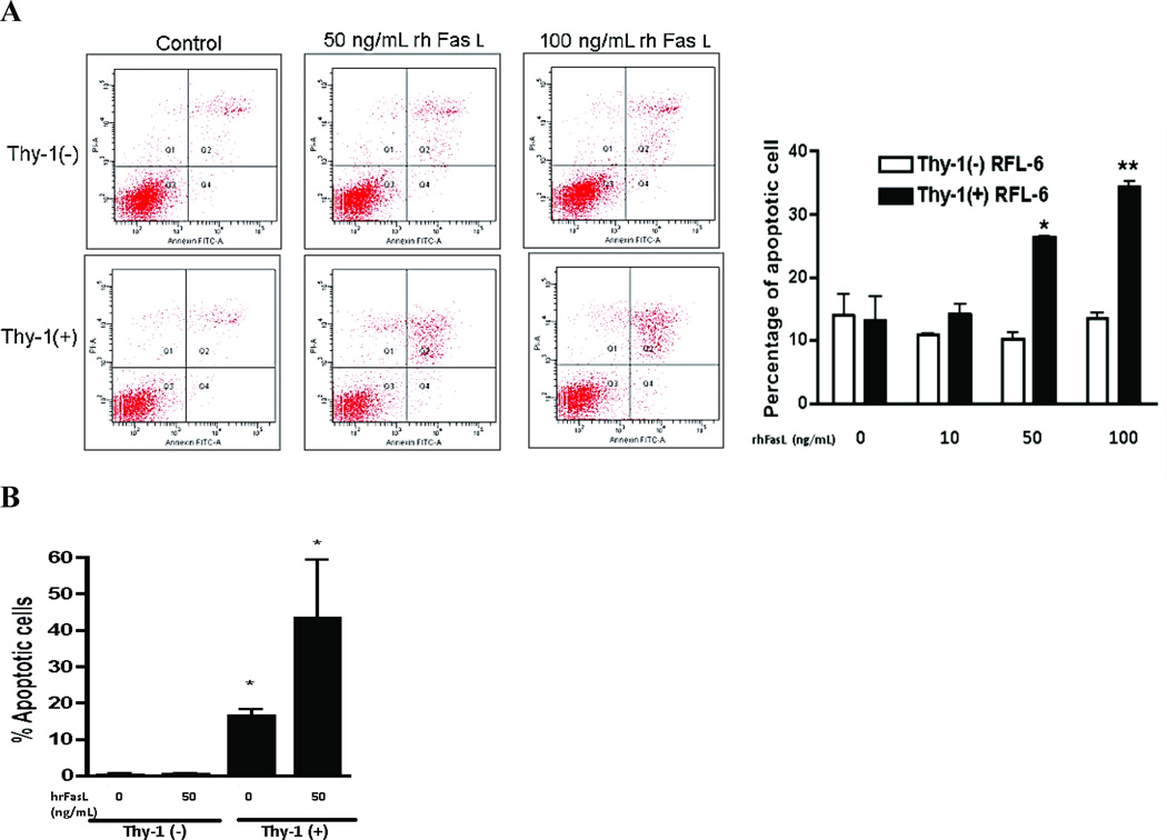 Thy-1 expression promotes fibroblast susceptibility to apoptosis A. RFL-6 Thy-1 (−) and Thy-1 (+) fibroblasts were treated with the indicated concentrations of rhFasL for 16h, and then cells were harvested and stained with Annexin V and PI and apoptosis quantified by flow cytometry. Results are representative of three independent experiments. Upper panels: Dot plots of FACS analysis with FITC-Annexin V and PI. The lower-left quadrants of the dot plot panels represent live cells (Annexin V−/PI−); the lower-right quadrants of the panels quadrants represent early apoptotic cells (Annexin V+/PI−); the upper-right quadrants of the panels quadrants represent later apoptotic cells (Annexin V+/PI+). Lower panel shows a quantitative representation of the flow cytograms. Each bar represents the mean±SEM of early + late apoptosis for at least three experiments. * denotes p