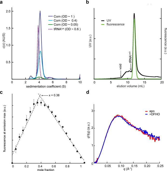 Biophysical analysis of Corn-DFHO dimer. ( a ) Non-normalized c (s) distributions for Corn RNA at three concentrations and tRNA Lys3 at a single concentration. ( b ) Fluorescence-size exclusion chromatogram (F-SEC) for the Corn-DFHO complex. Absorbance was monitored at 260 nm and fluorescence at the emission maximum (543 nm). Arrow denotes void volume (8 mL) as determined by an independent run with blue dextran (MW ~ 6 MDa) under identical conditions. Elution volume of the 76 nt tRNA Lys3 (10.9 mL) in an independent experiment under identical conditions is also indicated. ( c ) Job plot 23 for DFHO binding to Corn RNA. The fluorescence at the emission maximum (543 nm) was measured as a function of molar fraction [DFHO]/([DFHO]+[Corn RNA]). Mean and standard errors of three independent experiments ( Supplementary Fig. 2b ). The maximum (0.38), indicates 2:1 stoichiometry of RNA to DFHO. ( d ) Kratky analysis of experimental free- and DFHO-bound Corn RNA SAXS data.