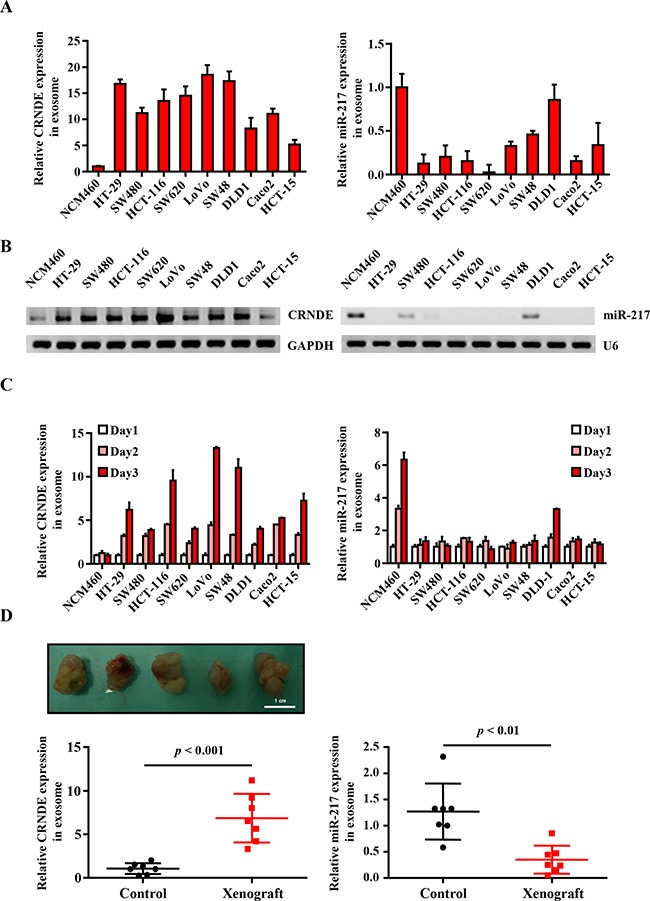 Human Colorectal Cancer Cell Lines Atcc Bioz Ratings For Life Science Research