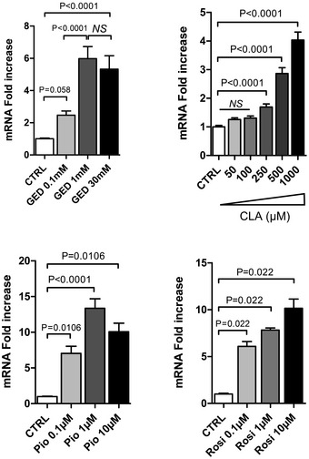 Dose effect of GED , CLA , pioglitazone, and rosiglitazone on LCT expression in Caco‐2 cells Caco‐2 cells were stimulated with various concentrations of each PPARγ agonist for 24 h as indicated. LCT gene expression was determined by qRT–PCR of corresponding reverse‐transcribed mRNA. Results represent the mean ± SEM (two to three independent experiments in triplicate or sixplicate) of the fold change of LCT gene expression. The expression level measured in control cells, arbitrarily defined as one, was used as reference. NS, not significant. Statistical analysis: two‐tailed nonparametric Mann–Whitney U ‐test.