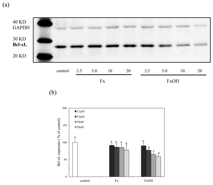 Suppression of the Bcl-xL protein expression due to marine carotenoids, fucoxanthin (Fx) and its metabolite fucoxanthinol (FxOH) in RAW 264.7 macrophage cells. The Bcl-xL protein expression with Fx and FxOH in the range of 2.5–20 μM on the Nrf2-ARE signaling in cells was examined. ( a ) Western blot analysis of the Bcl-xL protein in the presence of compounds. ( b ) Densitometry analysis of the expression of Bcl-xL protein. Data were expressed as mean ( n = 3) ± SD. Analysis of data was carried out using ANOVA and Tukey's method for multiple comparisons. A significance p