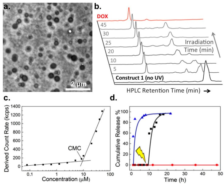 "Characterization of doxorubicin pro-drug micelles and light induced drug release. ( a ) TEM (transmission electron microscopy) image (uranyl acetate stain) of micelles of 1 (300 μM, approx. 0.7 mg/mL); ( b ) Time evolution of the HPLC (high-performance liquid chromatography) spectra of a solution of 1 (100 μM in PBS (phosphate buffered saline)) during photolysis (365 nm, 3–5 mW/cm 2 ). Free DOX (100 μM), dissolved in PBS, was used to confirm clean photolysis of 1 to release ""active"" DOX. HPLC conditions described in Materials and Methods; ( c ) CMC (critical micelle concentration) determination by light scattering following serial dilution of 1 (100 μM–75 nM) in PBS; ( d ) In vitro DOX release profiles from 1 (300 μM) in PBS. No UV irradiation ( red ), UV irradiation at 9 h ( black ) and free DOX control ( blue )."