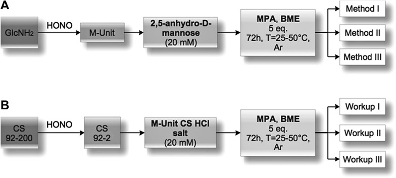 Experimental design flowchart. (A) Mechanistic studies. Glucosamine (GlcNH 2 ) was treated with nitrous acid to form the 2,5-anhydro- d -mannose (M-Unit) that was reacted with 2 thiol-bearing molecules (β-mercaptoethanol and 3-mercaptopropionic acid, BME and MPA, respectively). The reaction products were treated using one of 3 methods, i.e. Method I: direct LC-MS analyses to determine to which extent thioacetal formation occurs in situ ; Method II: freeze-drying (FD) + LC-MS analyses to assess the effect of FD on the thioacetal proportion and to ascertain that no by-products appear post-FD; Method III: acetate buffer pH 4 + FD + LC-MS analyses to determine the effect of an increase in pH prior to FD (this pH increase was included here to prevent any CS acid hydrolysis that could occur when Method II, i.e. FD at pH 1, would be transposed to the polymer). (B) Chitosan M-Unit reactivity. CS 92-200 was depolymerized with nitrous acid to produce CS 92-2 HCl salt bearing the M-Unit at the cleaved end of the polymer. M-Unit CS 92-2 HCl salt was reacted with MPA and BME and the reaction products treated with one of 3 workups: Workup I: dialysis vs. HCl 1 mM solution + FD to remove all thiol model excess and to determine the in situ thioacetal formation rate; Workup II: FD + dialysis vs. HCl 1 mM solution + FD to determine the effect of FD on the functionalization rate; Workup III: acetate buffer pH 4 + FD + dialysis vs. HCl 1 mM solution + FD to determine the effect of an increase in pH prior to FD on the functionalization rate (this pH increase was included to prevent any CS acid hydrolysis that could occur during FD at pH 1 in Workup II). The degree of functionalization of the CS conjugates was determined by 1 H NMR, whereas covalent conjugation was assessed by DOSY NMR experiments and Ellman assays in order to rule out the possibility of a simple physical mixture of reagents.