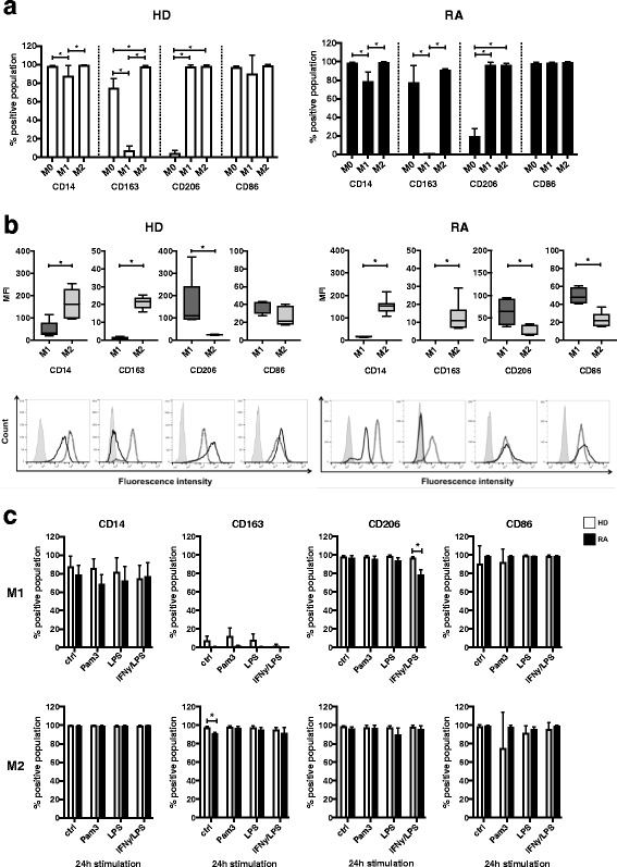 Characterization of surface markers on M0, M1-, and M2-polarized macrophages following Toll-like receptor (TLR) ligand exposure and activation. For phenotypical <t>analysis,</t> M0 (ex vivo monocytes), M1-like (GM-CSF-differentiated), and M2-like (M-CSF-differentiated) macrophages derived from peripheral blood of healthy donors (HD) or patients with rheumatoid arthritis (RA) were stained for <t>fluorescence-activated</t> <t>cell</t> <t>sorting</t> analysis with fluorescently labeled antibodies CD14-allophycocyanin-cyanine 7 (APC-Cy7), CD163-fluorescein isothiocyanate (FITC), CD206-BV421, CD86-phycoerythrin (PE), and CD80-FITC. a Comparison of surface marker expression on freshly isolated M0- versus M1- versus M2-differentiated macrophages from HD and patients with RA presented as the percentage of positively stained cell populations. b Quality of surface marker expression in M1- versus M2-differentiated macrophages from HD and patients with RA was analyzed by mean fluorescence intensity (MFI) and presented as a box plot ( upper panel ) and with representative histograms ( lower panel ; light gray area = unstained cells, dark full line = M1, dotted line = M2). MFI was calculated as ΔMFI = MFI specific surface marker − MFI corresponding unstained control and normalized to the basal MFI of unstained control cells. c Effect of TLR or interferon (IFN)-γ/lipopolysaccharide (LPS) stimulation on surface marker expression in M1- or M2-differentiated macrophages from HD compared with patients with RA presented as percentage of positively stained cell populations. n = 6, * p