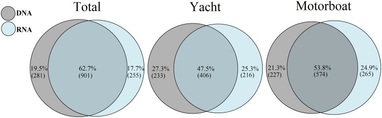 Venn diagrams showing the percentage of DNA-only, shared eDNA/eRNA and RNA-only Operational Taxonomic Units (OTUs) in all samples, as well as in samples from yachts and motorboats. Numbers in brackets correspond to the number of OTUs in each group.