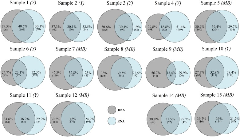 Venn diagrams showing the percentage of DNA-only, shared eDNA/eRNA, and RNA-only Operational Taxonomic Units (OTUs) in individual pairs of eDNA and eRNA samples. Numbers in brackets correspond to the number of OTUs in each group. Samples from either yachts ( Y ) or motorboats ( MB ) are indicated.