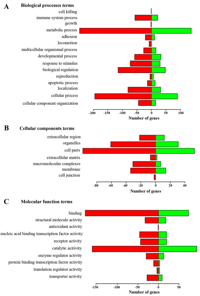 Functional annotation of genes changed more than 1.4-fold in tumor tissue of LLC-bearing mice after treatment with RNase A based on gene ontology (GO) categorization (A) Biological Process [BP]. (B) Molecular Function [MF]. (C) Cellular Components [CC]. The green bars show the number of genes enriched in the sample of treated mice; red bars show the number of genes with decreased transcription in a group of treated mice.