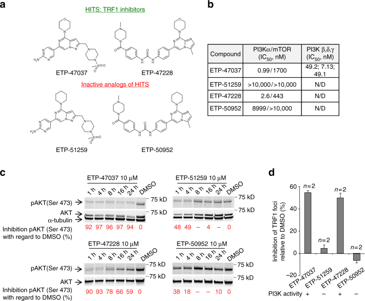 """Chemical inhibition of TRF1 binding to telomere by PI3K inhibitors. a Structures of ETP-47037, ETP-47228, and their corresponding """"inactive analogs"""" ETP-51259 and ETP-50952. b <t>PI3K/mTOR</t> IC 50 data generated internally and reported for the inhibitors used in the study. c Time course Inhibition of AKT phosphorylation at Ser473 by ETP-47037, ETP-51259, ETP-47228, and ETP-50952 at 10 μM in CHA-9.3 cell line. d Percent inhibition of TRF1 foci by immunofluorescence in CHA-9.3 mouse lung tumor cell line treated with 10 μM of either ETP-47037, ETP-47228, or their corresponding inactive analogs (ETP-51259 and ETP-50952, respectively) relative to TRF1 levels with DMSO treatment. The ETP compound inhibitory activity on PI3K pathway is stated at the bottom of the graph. Error bars represent standard deviation. N/D not determined, n number of independent experiments"""