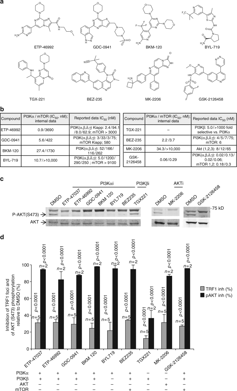 TRF1 regulation by PI3K and AKT inhibitors. a Structurally diverse PI3K and PI3K/mTOR inhibitors used in the study. b PI3K and mTOR data generated internally and reported in literature. c Representative western blot images of phosphorylated AKT-Ser473 and total AKT in CHA-9.3 mouse lung tumor cell line at 24 h after treatment with PI3K, AKT, and mTOR inhibitors as indicated. d Percent inhibition of TRF1 foci by immunofluorescence and of AKT phosphorylation at S473 (pAKT) in CHA-9.3 mouse lung tumor cell line at 24 h after treatment with the indicated inhibitors relative to TRF1 levels and to pAKT levels in control cells treated with DMSO. The inhibitors were tested at 10 μM except GSK-2126458 that was used at 1.0 μM (in c and d ). Error bars represent standard deviation. The Student's t test was used for statistical analysis; P values are shown. n number of independent experiments